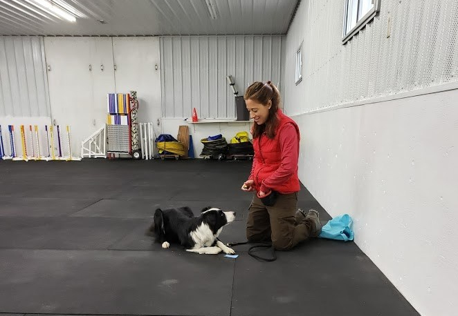 Training a Border Collie in dog training class