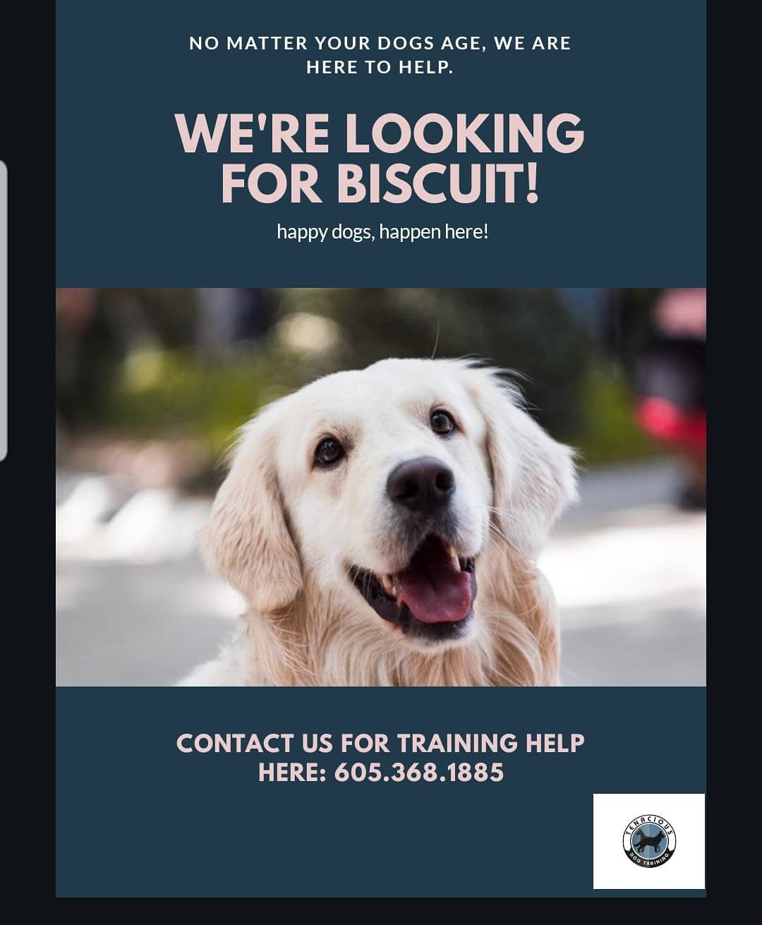 Sioux Falls Dog Training