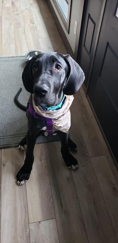 Tenacious Dog Training- Potty training tips.