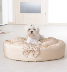 Little dog in a bed