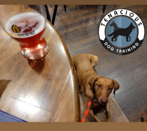 Brown dog in a brewery
